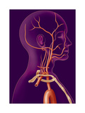 Carotid, Illustration Giclee Print by  Kermoal