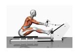 Musculation Reproduction procédé giclée par Medicalrf.com BSIP