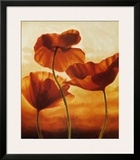 Poppies in Sunlight II Prints by Andrea Kahn