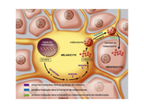 Mélanocyte Impression giclée par  Jacopin