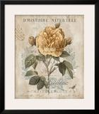 Botanique II Print by Deborah Devellier
