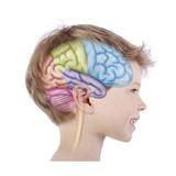 Les Lobes Du Cerveau - Enfant De 6 Ans Giclee Print by Sophie Jacopin