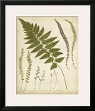 Fern Portfolio II Poster by Francis G. Heath