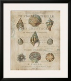 Shell Collection I Prints by Deborah Devellier