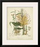 Twining Botanicals VII Poster by Elizabeth Twining