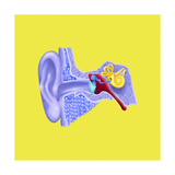 Internal Ear Giclee Print by Arqueveaux BSIP