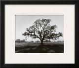 Oak Tree, Sunrise Posters by Ansel Adams