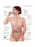 Digestion, Dessin Reproduction procédé giclée par  Jacopin