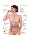 Digestion, Drawing Giclee Print by  Jacopin