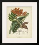 Twining Botanicals III Posters by Elizabeth Twining