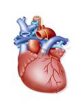 Heart, Illustration Prints by Jacopin BSIP