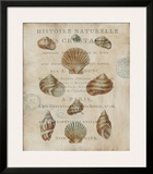 Shell Collection II Poster by Deborah Devellier