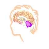 Brain Prints by Arqueveaux BSIP