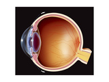 Oeil Dessin Prints by Zemedical Comjacopin