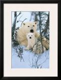Northern Nursery Framed Giclee Print by Art Wolfe