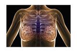 Breast Art by Medicalrf.com BSIP