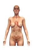 Endocrine Gland Poster