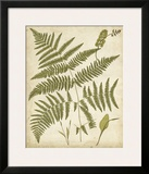 Fern Portfolio IV Print by Francis G. Heath