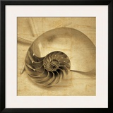 Chambered Nautilus Prints by John Seba