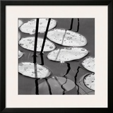 Lily Pads, Sunrise Posters by David Gray