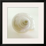 Shell IV Prints by Darlene Shiels