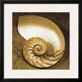 Chambered Nautilus Poster by Caroline Kelly