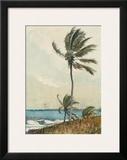 Palm Tree, Nassau Print by Winslow Homer