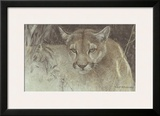 Tropical Cougar Print by Robert Bateman