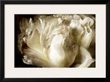 Elegant Peony I Prints by Christine Zalewski