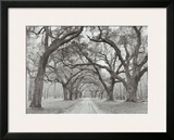Oak Arches Poster by Jim Morris