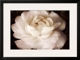 Elegant Ranunculus II Poster by Christine Zalewski