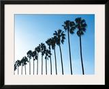 La Jolla Palms Print by Jenny Kraft