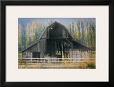 Barn and Poplars Framed Giclee Print by David Winston