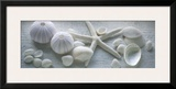 Driftwood Shells I Poster by Bill Philip