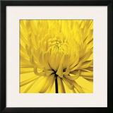 Yellow Mum IV Framed Giclee Print by Jenny Kraft