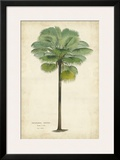 Palm of the Tropics II Prints by  Van Houtteano