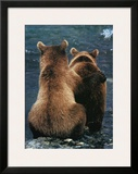 Two Bear Cubs Framed Giclee Print by Art Wolfe