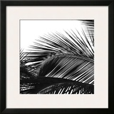 Palms 13 (detail) Framed Giclee Print by Jamie Kingham