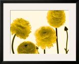Floral Gathering Framed Giclee Print by Katja Marzahn