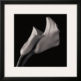 Calla Lilies Framed Giclee Print by Michael Harrison