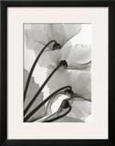 Cyclamen Study IV Prints by Steven N. Meyers