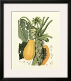 Island Fruits IV Prints by Berthe Hoola Van Nooten