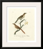 Antique French Birds I Prints by Francois Langlois