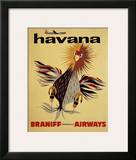 Braniff International Airways, Havana Prints