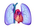 Anatomie Du Coeur Et Des Poumons (Écartés Pour Laisser Apparaître Le Coeur) Giclee Print by Brian Evans