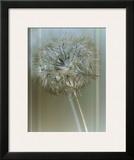 Flaura I Framed Giclee Print by W. Blake