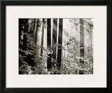 Misty Forest Prints by Dennis Frates