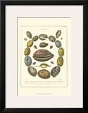 Conchology Collection III Prints by Albertus Seba