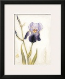 Purple Iris with Beard I Prints by Meg Page