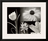 Summer Garden I Prints by Dennis Frates
